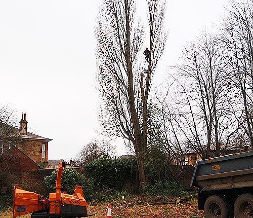 Tree Sureons Glasgow